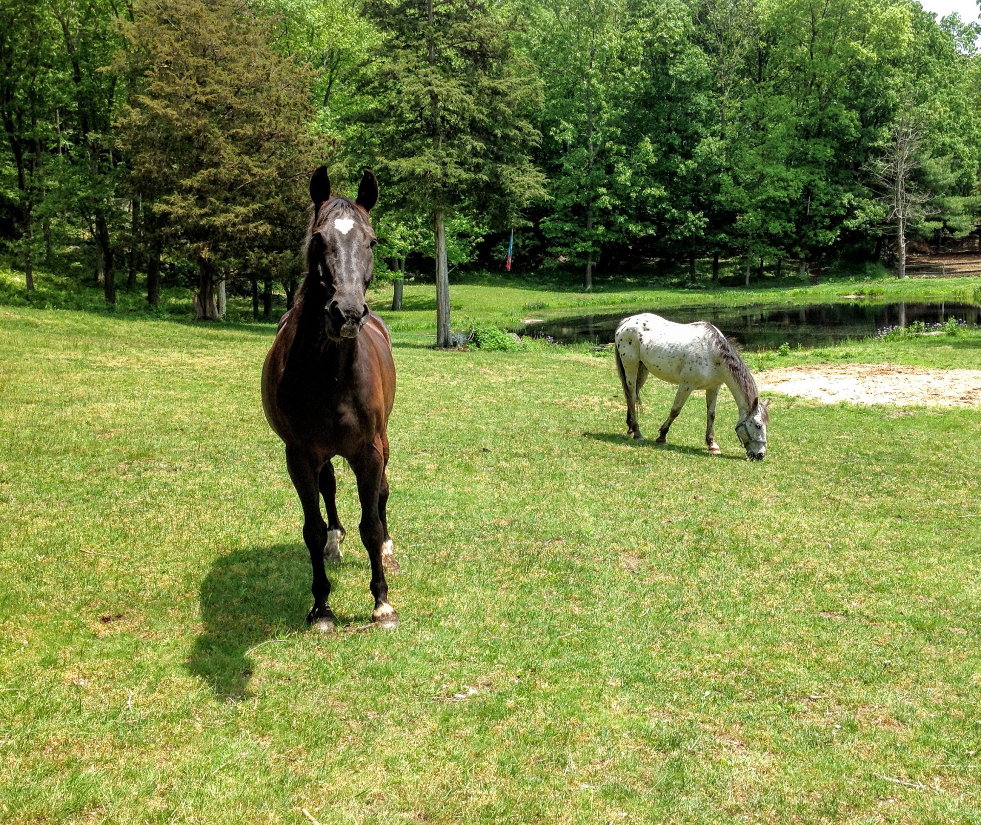 Horseback Riding Lessons near Montville, CT